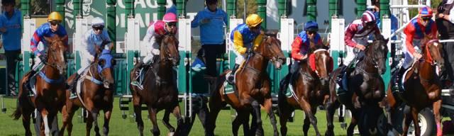 Horse Racing Vouchers
