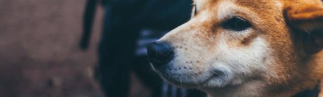 Argos Pet Insurance Promotional Codes