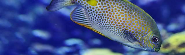 Bristol Aquarium Vouchers