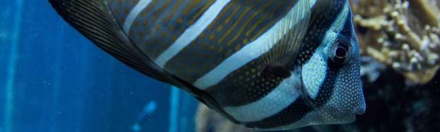 Deep Sea World Vouchers
