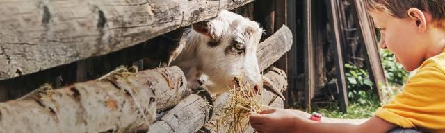 Noah's Ark Zoo Farm Discount