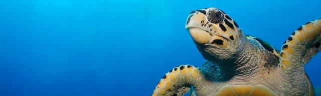 Sea Life Aquarium Coupons