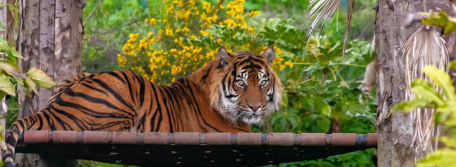 edinburgh zoo deals 2019