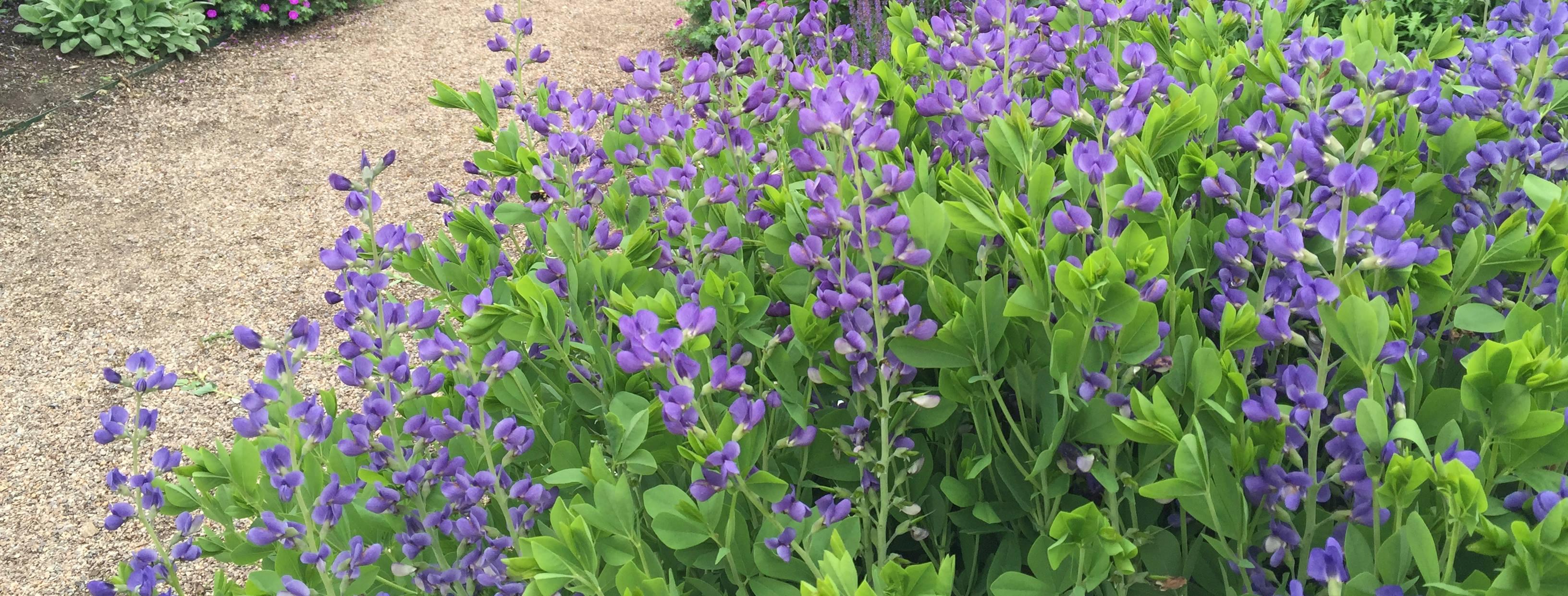 Gardeners Supply - Gardeners Supply Promotion Code Free Shipping