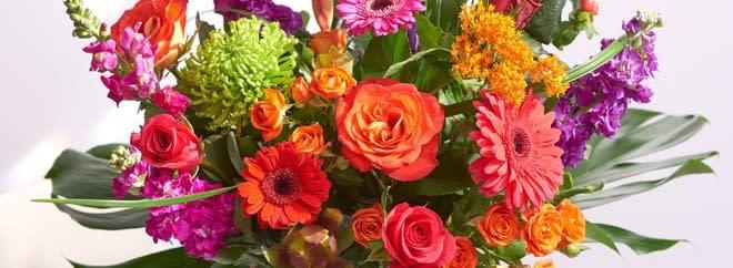 bouquets house plants