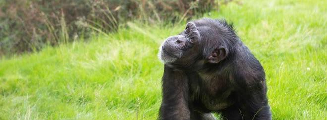 Twycross Zoo Banner Groupon UK