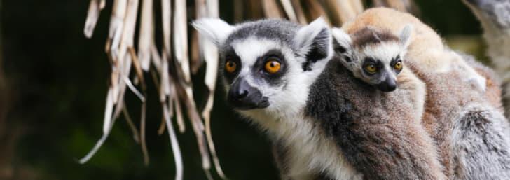Take Advantage of 33% Off Zoo Entry at Bristol Zoo Gardens