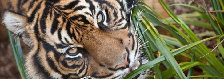Grab a Day Ticket from as Little as £7 at Dudley Zoological Gardens