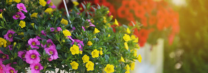 Find a £5 Discount on Selected Pots and Containers at Garden by Waitrose & Partners