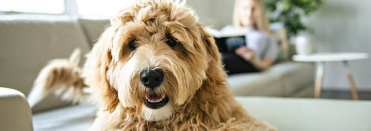 Free Pet Insurance Quotes at Pet Plan