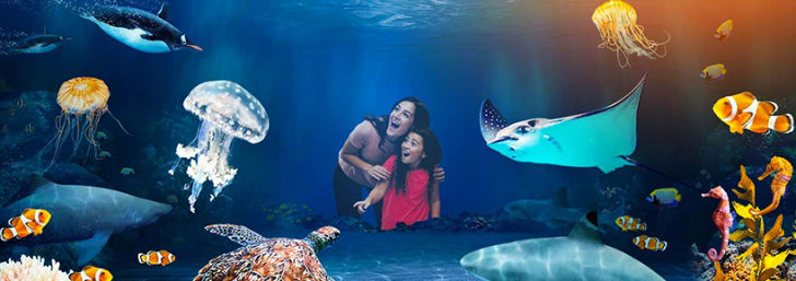 Save up to 45% onTickets at SEA LIFE Centres & Sanctuaries