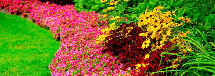 Świeże Nasiona Nawet 60% Taniej w Świat Kwiatów