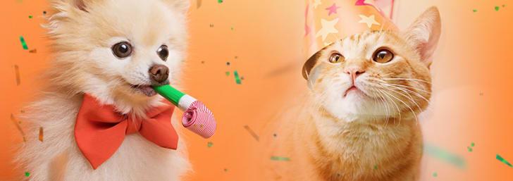 -15% EXTRA en snacks para perros y gatos en Zooplus