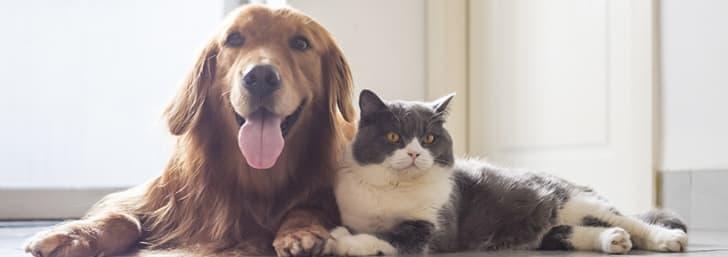 -50% DTO. en comida y accesorios para perros en Zooplus