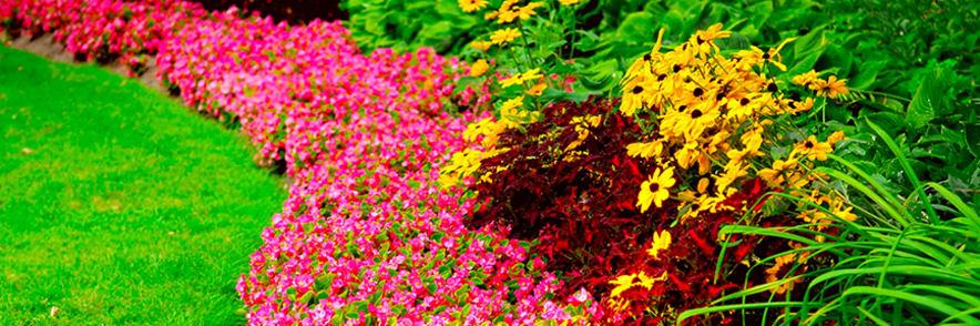 Do -50% na Produkty w Promocji Świat Kwiatów