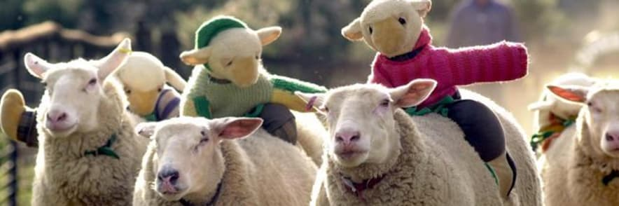 Kids Go Free! 1 Free Child with 2 Paying Adults | The Big Sheep 🐑